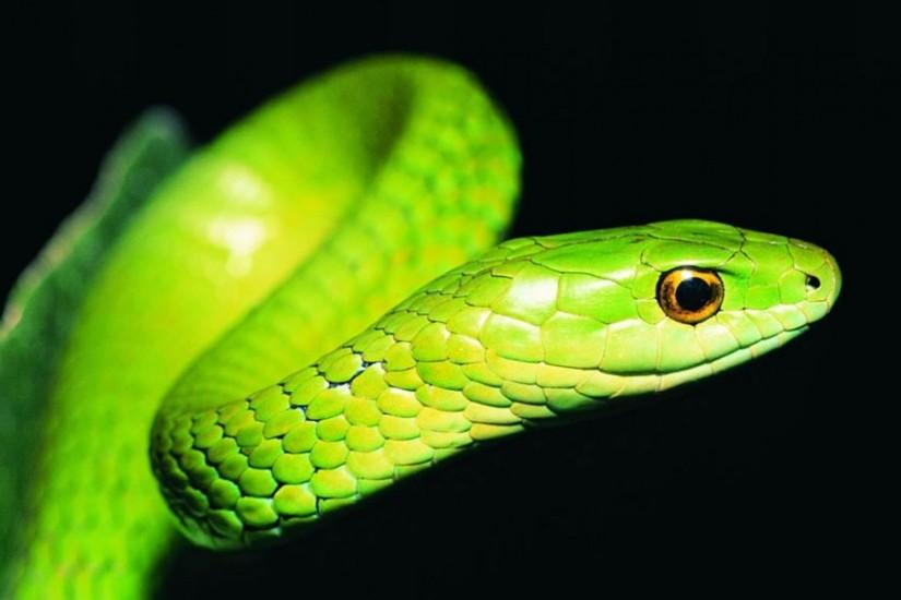 Snake Wallpapers Android All Wallpaper Desktop 1920x1080 px 173.82 KB  animal Free Logo Wallpaper Ular Cobra