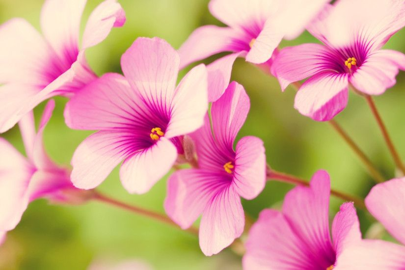 Spring Flower wallpaper - 702489