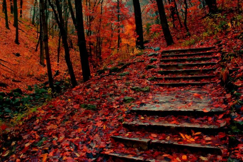 Red Leaves Stair Forest Fall Scenery Wallpaper