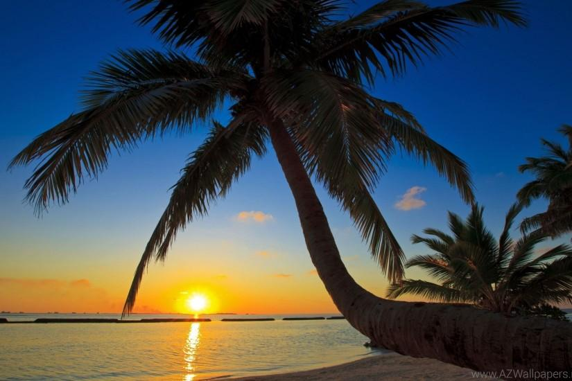 Sunrise Beach Palm Tree Wallpaper.