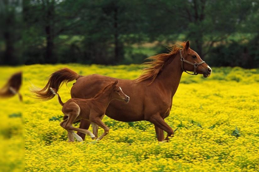 Baby Horse Backgrounds - HD Wallpapers