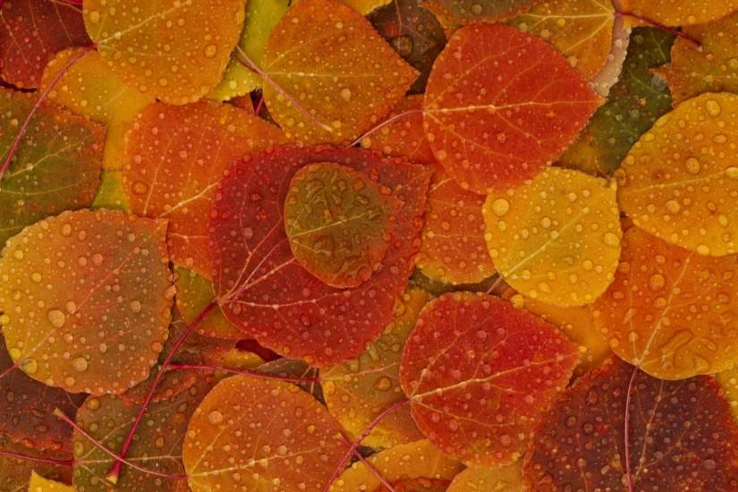Fall-Leaves-HD-Wallpaper-2560x1600 - My Cleaning Lady