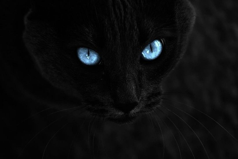 1920x1080 cat, Selective Coloring, Animals, Blue Eyes, Black Cats Wallpapers  HD /