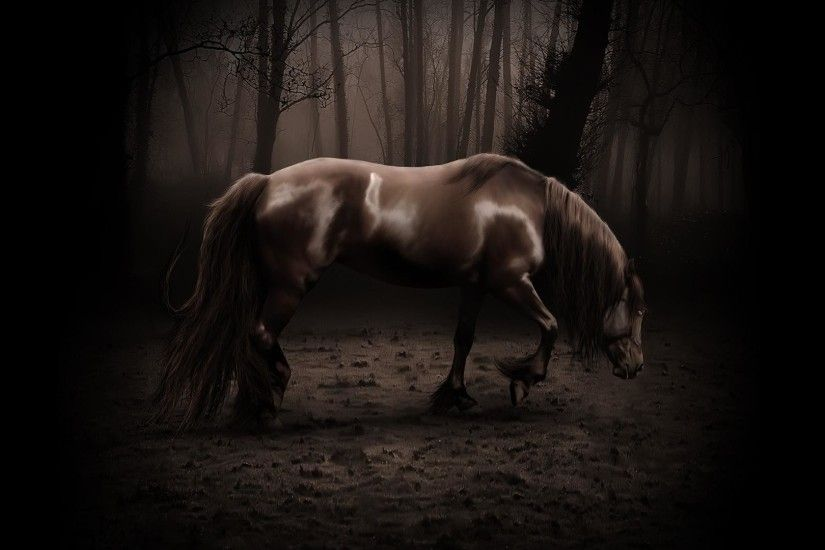1920x1080 Hd Forest horse backgrounds wide  wallpapers:1280x800,1440x900,1680x1050 - hd backgrounds
