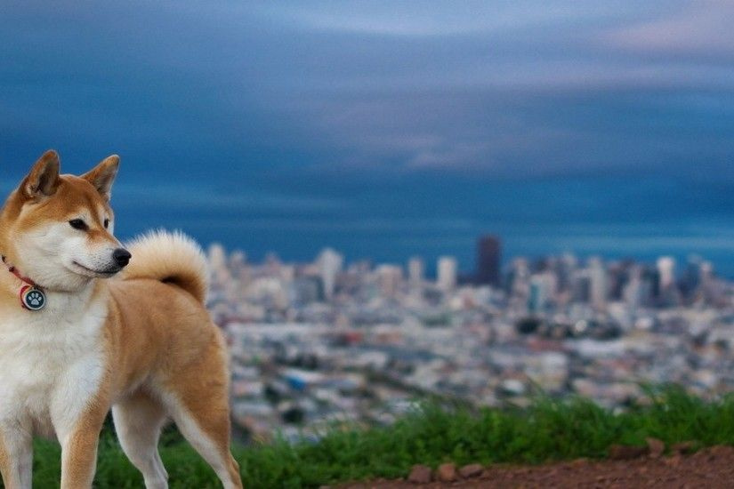 3840x1200 Wallpaper akita inu, hill, dog, nature