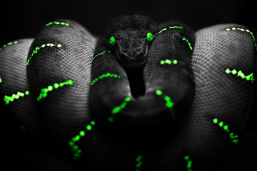 Black-Snake-Background-Wallpaper.jpg