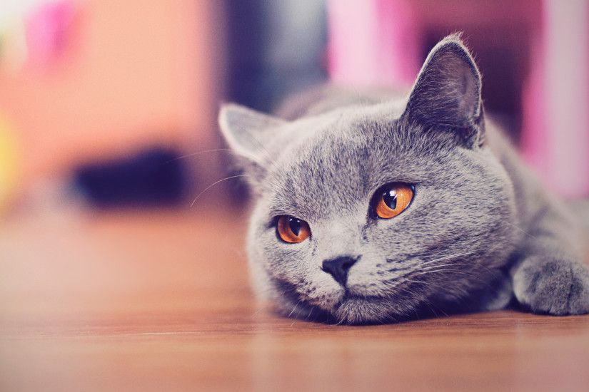 ... Cat Wallpaper hd wallpapers Page 0 High Resolution