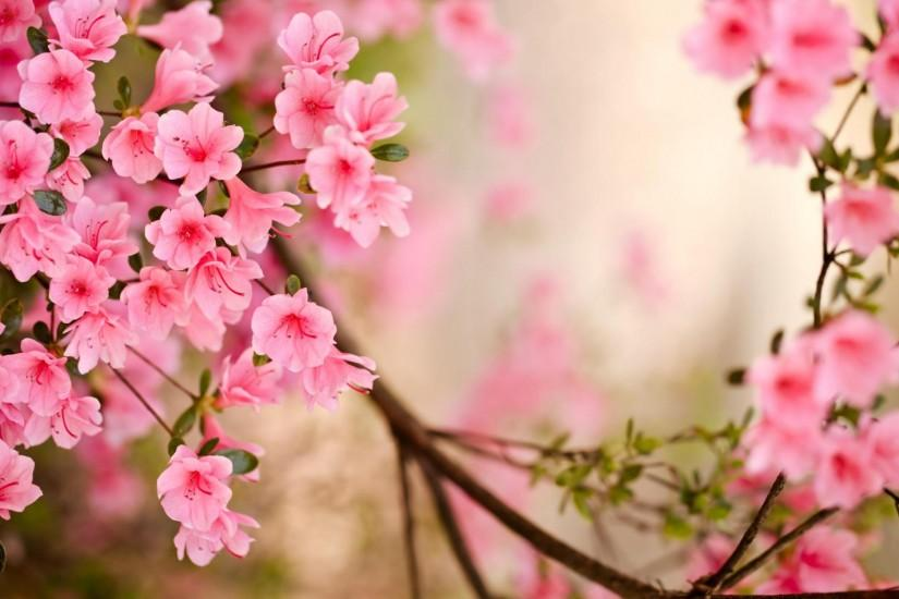 40 Beautiful Flower Wallpapers for your desktop ...