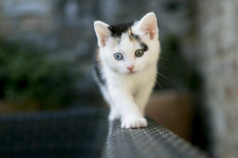 Cute Cat Desktop Images