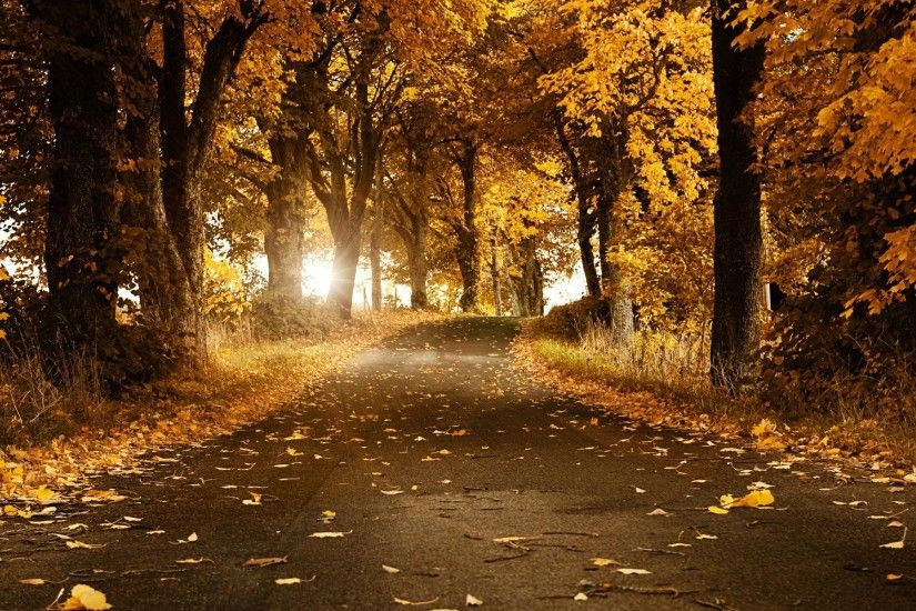 Fall Backgrounds – download free