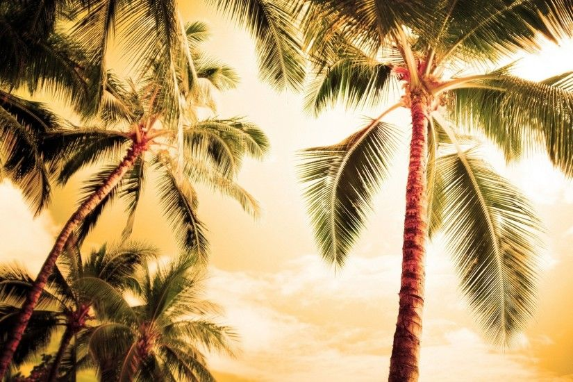 Palm Tree Wallpapers - Wallpaper Cave Palm Trees Beach HD desktop wallpaper  : High Definition .