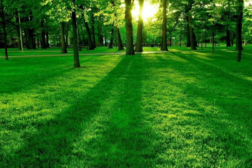 Summer green nature wallpaper 1600 1200 hd desktop wallpapers .