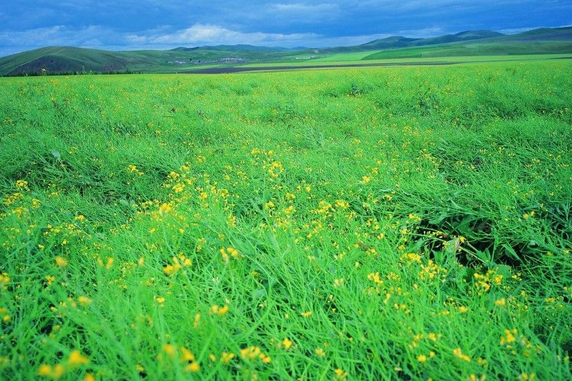 Cool Summer broad grassland scenery background