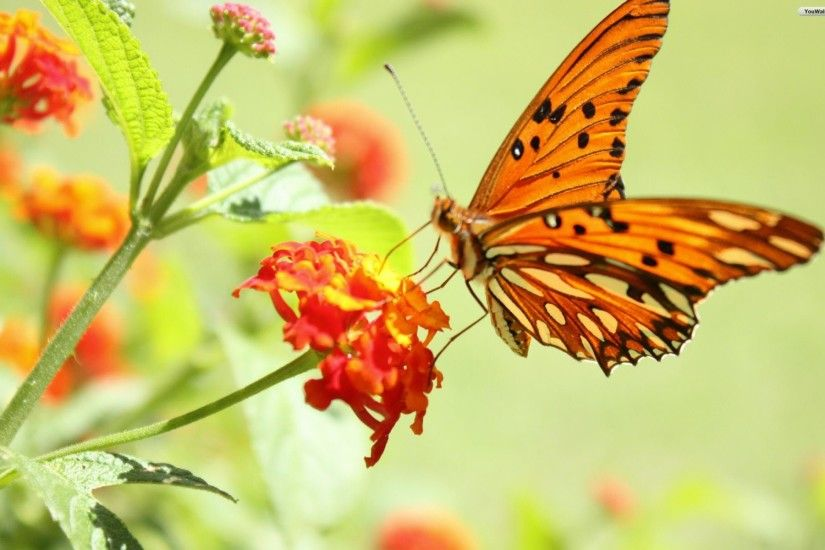 Cute Butterfly Wallpapers Wallpapertag