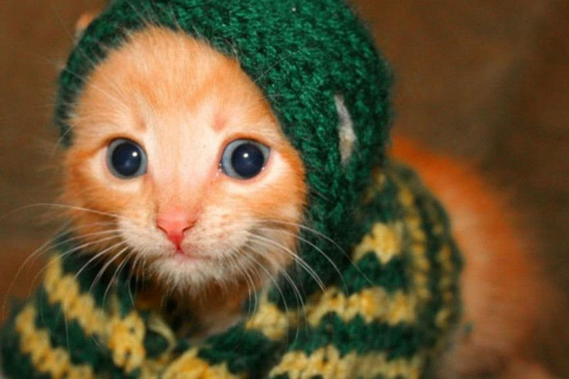 hd pics photos funny dressed cat hd quality desktop background wallpaper