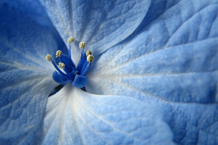 Desktop Wallpaper Blue Flowers Hd Images 3 HD Wallpapers | Walhill.com