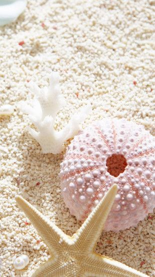 1440x2560 Wallpaper flowers, sand, seashells, summer, mood