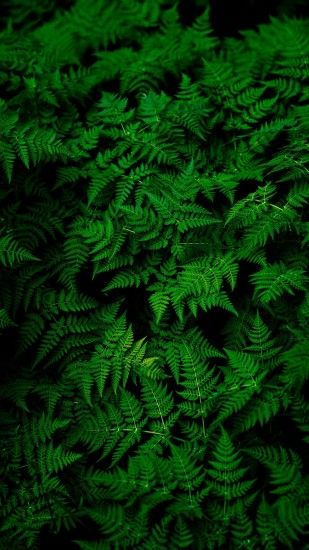 1440x2560 Wallpaper leaves, plant, green