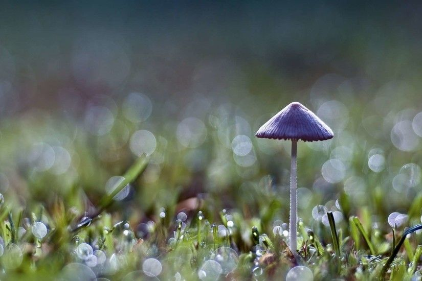 Free desktop wallpapers and backgrounds with mushroom, forest, grass,  mushroom, nature. Wallpapers no.