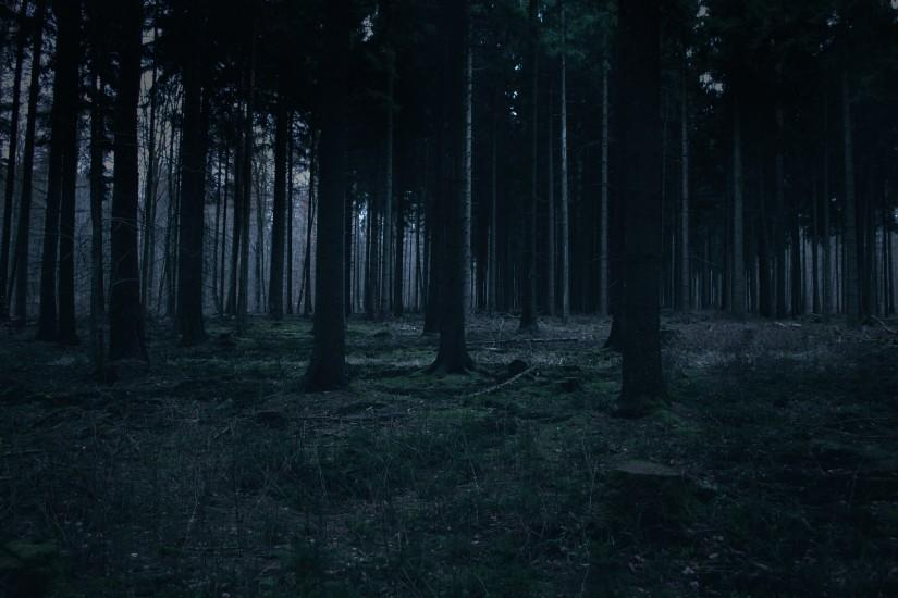 widescreen dark forest background 3227x1899