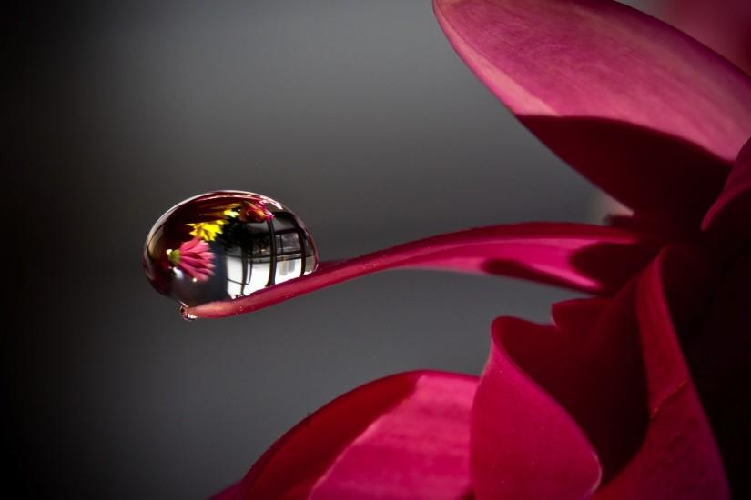 Full HD Flowers Droplets WallpapersFull HD Flowers Droplets Wallpapers