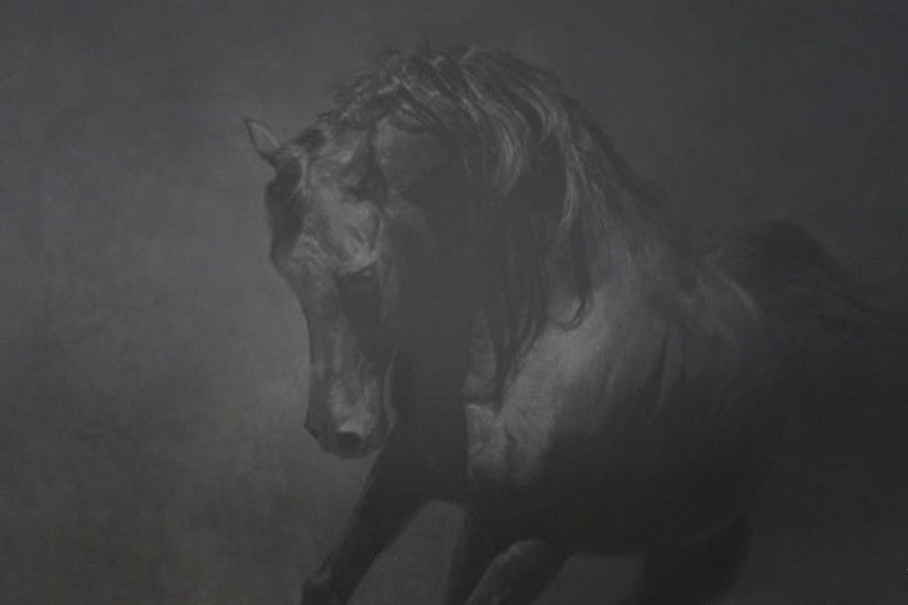 ... 3181 black and white horses wallpaper wallpaper tags wallpaper ...
