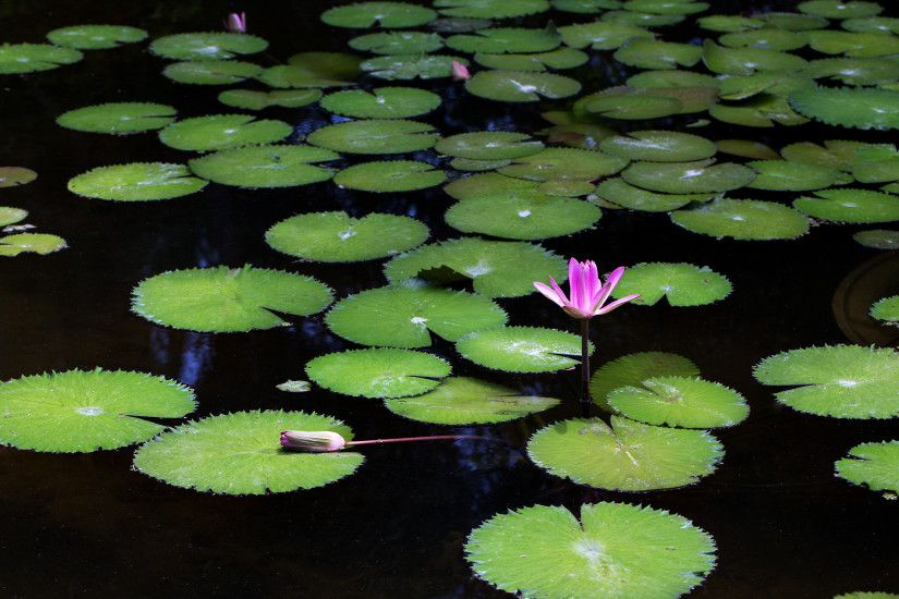 """Dancing on Lily Pads"" 