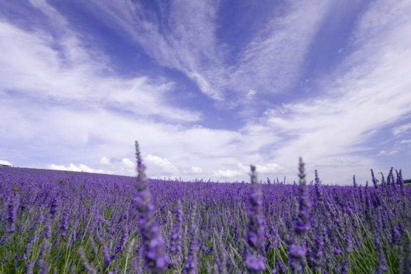 lavender background 2560x1600 for mobile hd