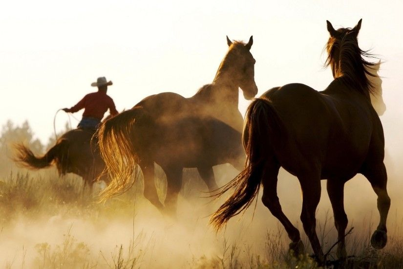 Western Horse Wallpaper | Wallpapers Gallery horse, Animals, Cowboys,  Western Wallpapers HD / Desktop and .