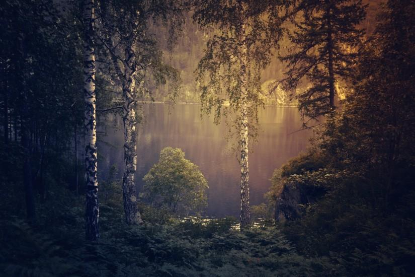 download dark forest background 1920x1307