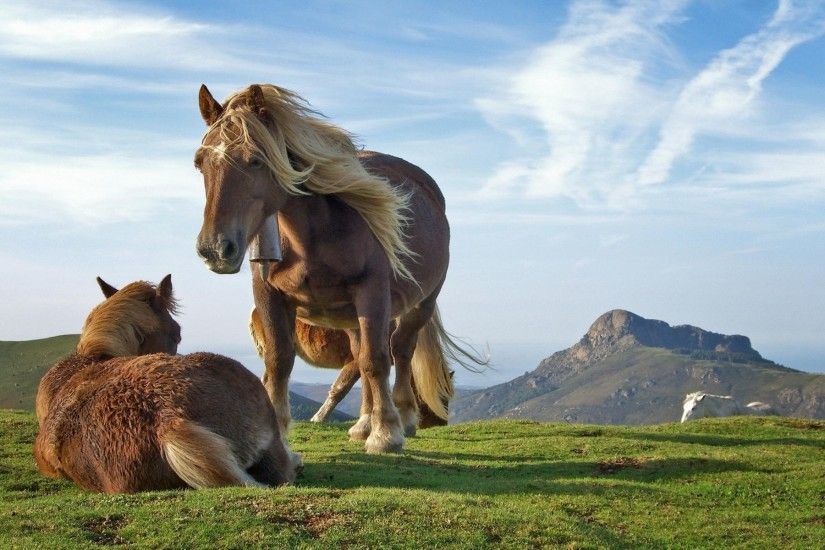 Check out Hill Horse HD Wallpapers. We add quality wallpapers, cover  pictures and funny pictures on a daily basis.