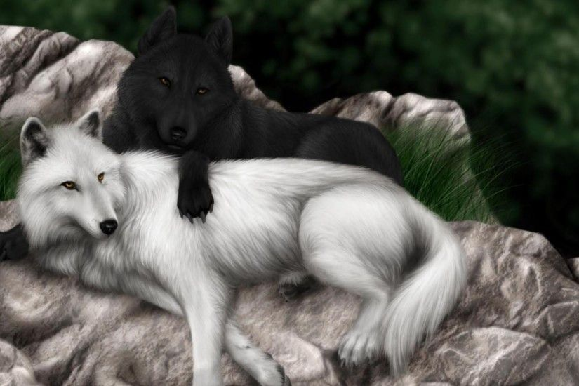 Animals - Black White Wolf Wolves Animal Pictures Real for HD 16:9 High  Definition