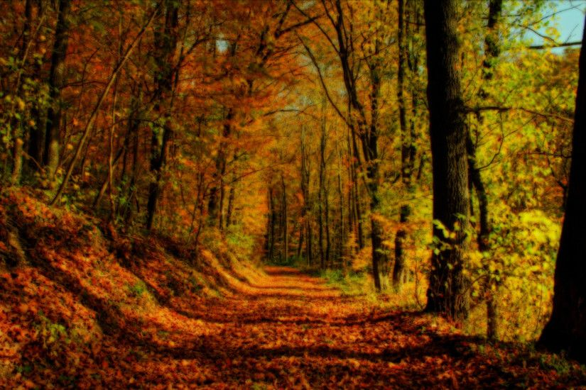 fall forest background 8