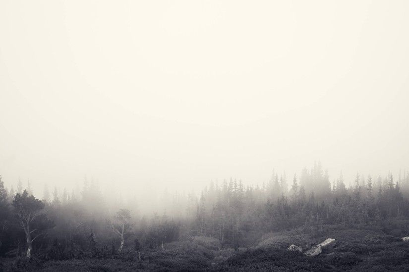 wallpaper.wiki-Backgrounds-Foggy-Forest-2560x1709-PIC-WPB004340
