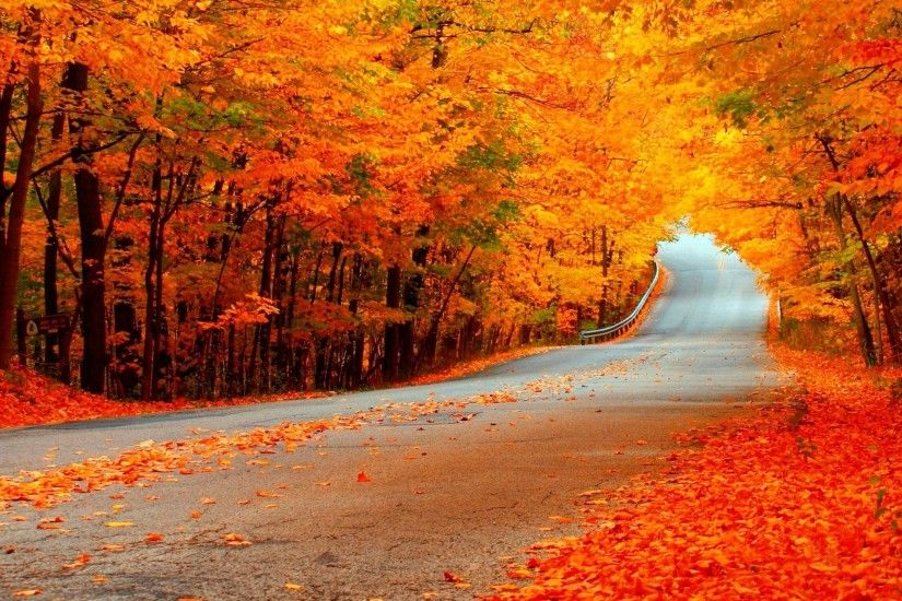 2560x1440 nature autumn road forest colorful path leaves trees fall  wallpaper . | Fall | Pinterest