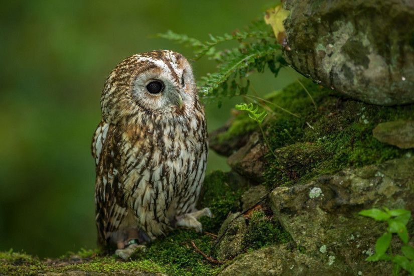 Cute owl HD Wallpaper 1920x1080 Cute owl HD Wallpaper 1920x1200