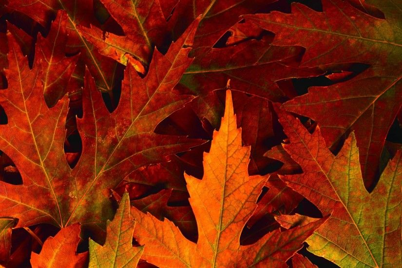 desktop wallpaper fall foliage - www.
