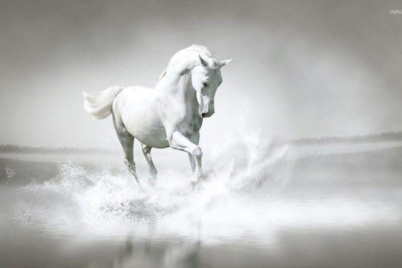 Luxury White Horse - Animal Wallpaper hd - Pure White Horse