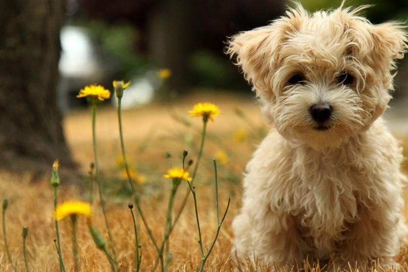 free download puppies wallpaper 1920x1080