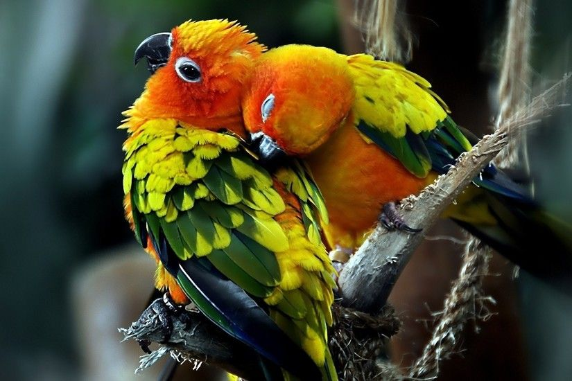 beautiful parrots pictures