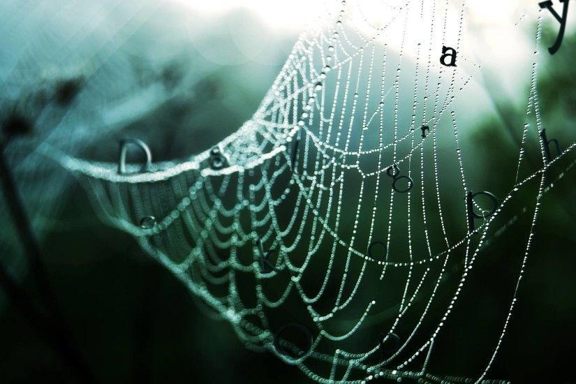 Spider Web Wallpapers - Full HD wallpaper search - page 8