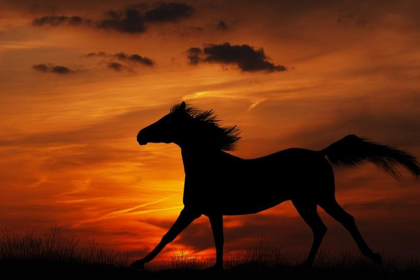 horse backgrounds 1920x1200 720p