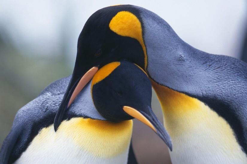 Animal - Emperor Penguin Wallpaper