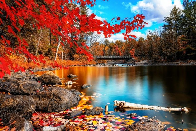 Beaty Autumn Wallpaper