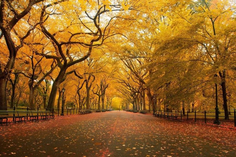 ... 904 Fall HD Wallpapers | Backgrounds Wallpaper Gallery ...