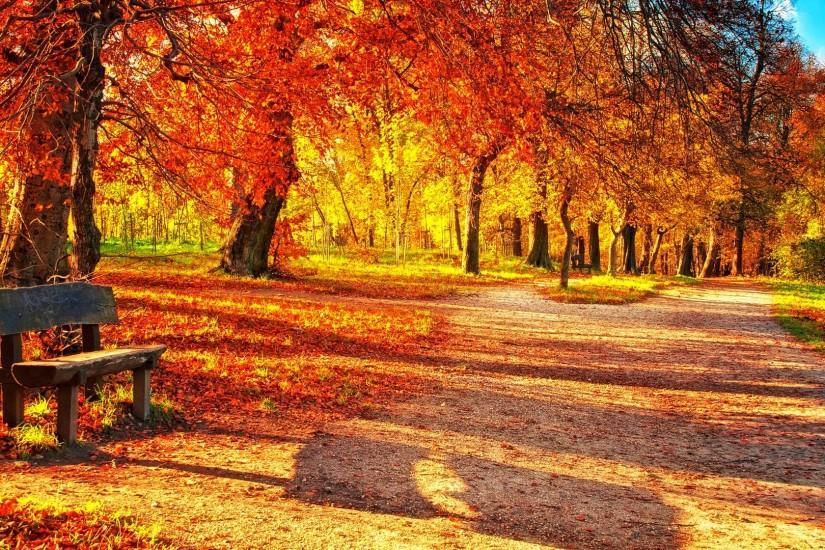 Fall Leaves Wallpapers Free