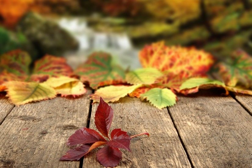 <b>Autumn Leaves Wallpapers</b>