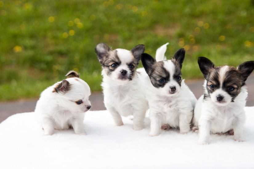 cool puppies wallpaper 3840x2160 pc