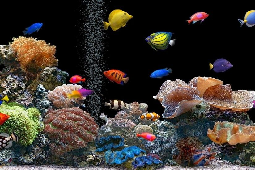 Preview wallpaper fish, underwater, colorful, coral 1920x1080