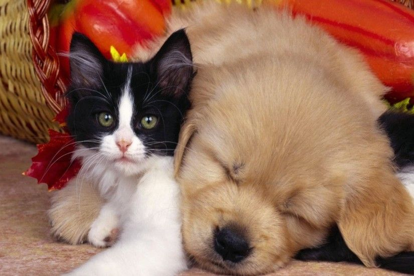 Cute Cat and Dog Wallpaper